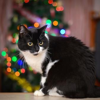 Schwarzweiss-katze und weihnachtslichter