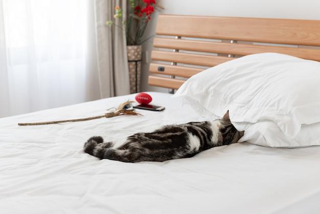 Schwarzweiss-katzenschlaf auf gemütlichem weißem bett im modernen schlafzimmerinnenraum