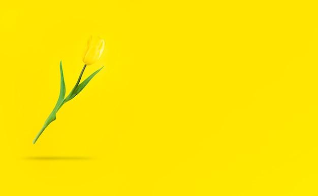 Schwebende gelbe tulpe mit schatten darunter und kopierraum.