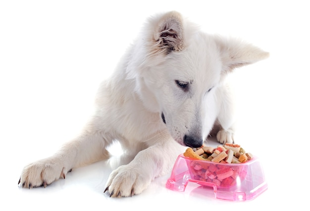 Schweizer schäferhund essen