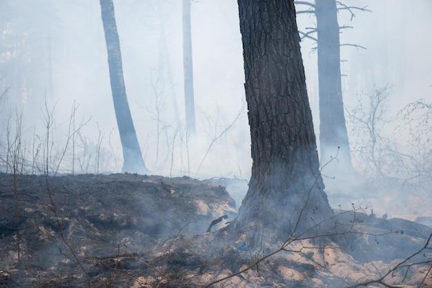 Schwelende bäume, gras und wurzeln von bäumen mit viel rauch