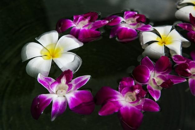 Schwimmende blume. plumeria mit orchidee
