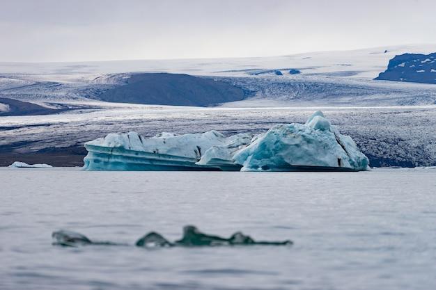 Schwimmende eisberge in der jokulsarlon-gletscherlagune, island.