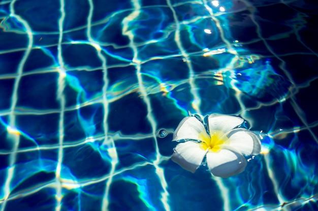 Schwimmende frangipani-blüten im pool