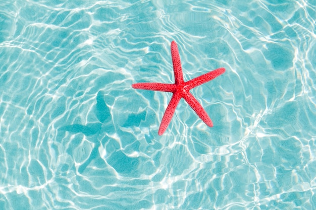 Schwimmende rote seesterne im türkisfarbenen sandstrand