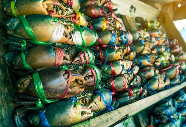 Scylla serrata. frische krabben werden mit bunten plastikseilen gebunden und in ordentliche reihen am meeresfrüchtemarkt in thailand vereinbart. rohstoffe für meeresfrüchterestaurantkonzept mit aufflackernlicht