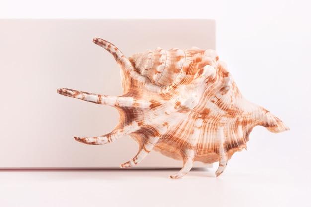 Sea spiral shell auf hellem hintergrund platz für text einer der serien