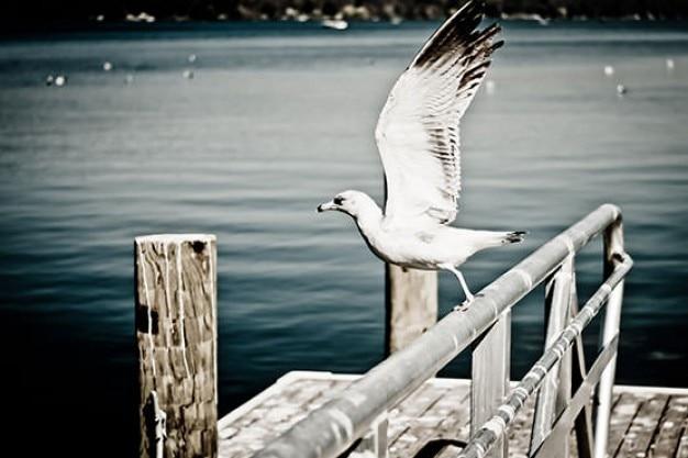 Seagull flügeln