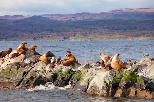 Seal island in der nähe von ushuaia
