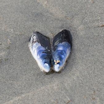 Seashell auf sand, cox bay, pacific rim nationalpark reserve, tofino, vancouver island, british colu
