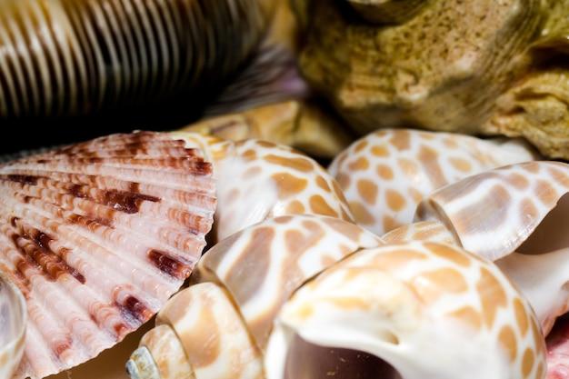 Seashell-hintergrund-makro