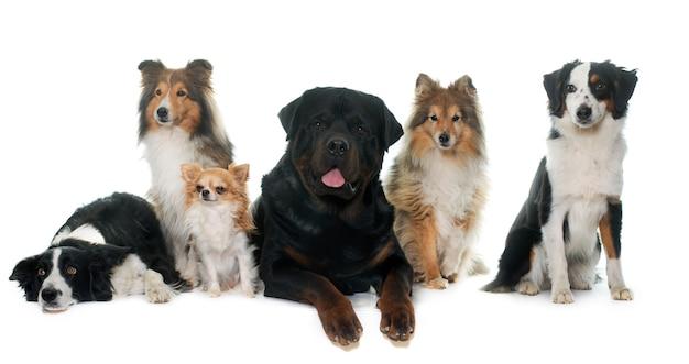 Sechs schöne hunde