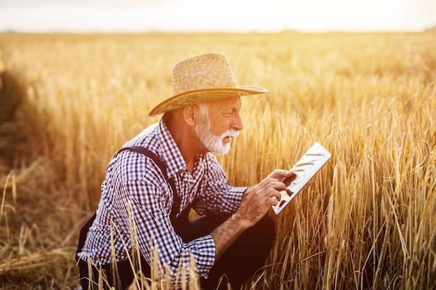 Sechzig jahre alter agronom, der weizenfeld inspiziert und tablet-computer verwendet.