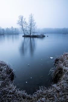 See bedeckt mit dem dichten nebel mit ein paar bäumen, die im wasser wachsen