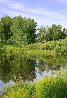 See im wald im sommer die wasseroberfläche mit der reflexion der grünen bäume unter