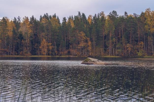 See in karelien unter lärchen, russland. schöne herbstsaisonlandschaft mit fluss und wald stockfotografie