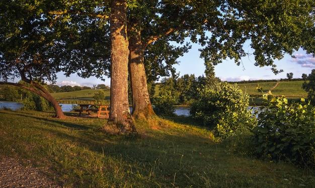 See mit bäumen im sonnenuntergang