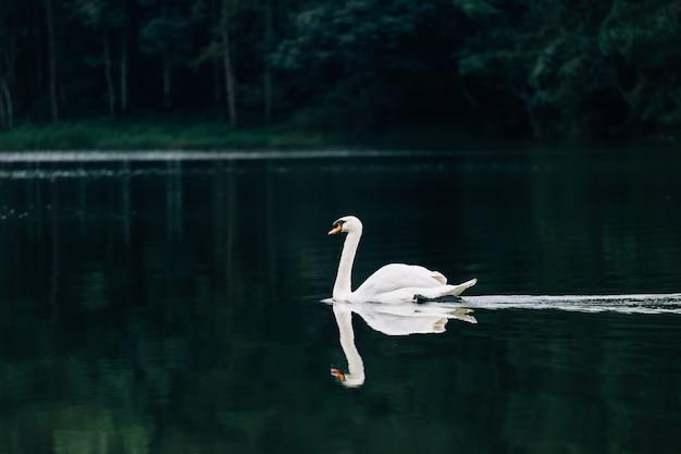 See mit einem weißen schwan