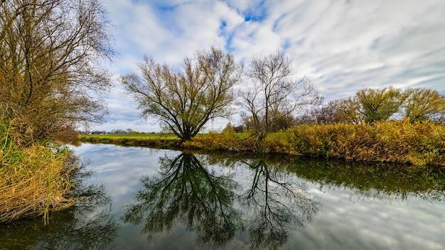 See mit einer reflexion von bäumen an einem bewölkten tag
