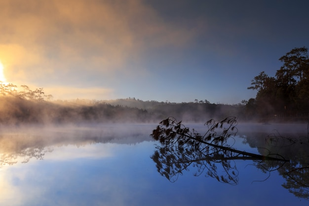 See- und kiefernwald auf morgenzeit bei chiang mai, thailand
