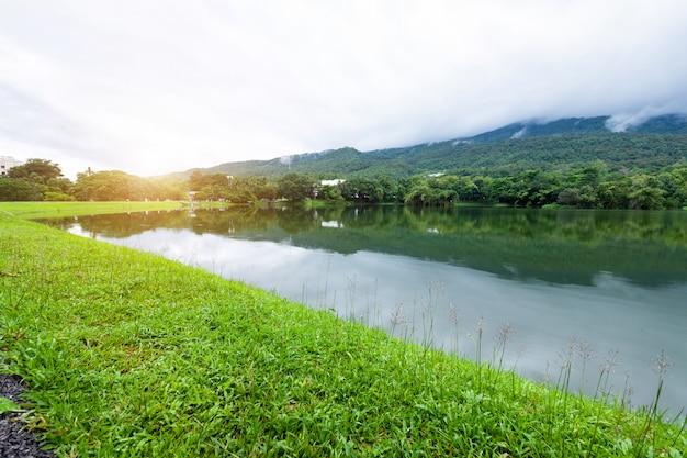 Seeblick der landschaft des grünen grases