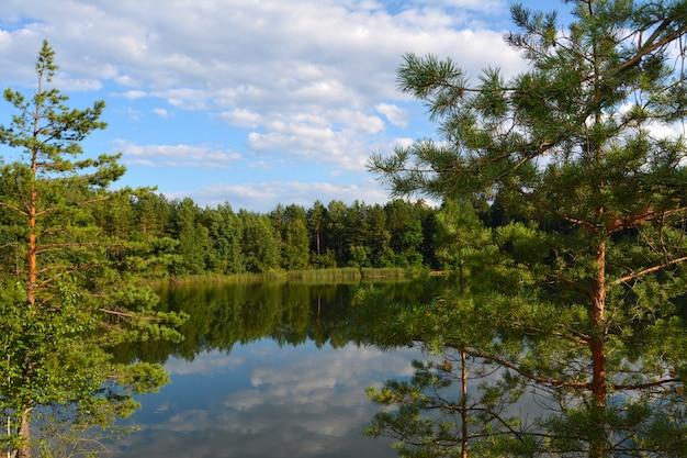 Seeblick durch tannenzweige. blaue seen in der chernihiv region, ukraine