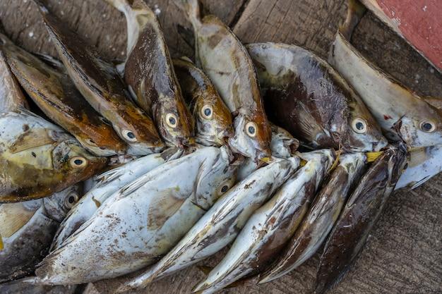 Seefrischer fisch am straßenlebensmittelmarkt von sansibar-insel, tansania, afrika. meeresfrüchte-konzept. roher fisch zum kochen, nahaufnahme