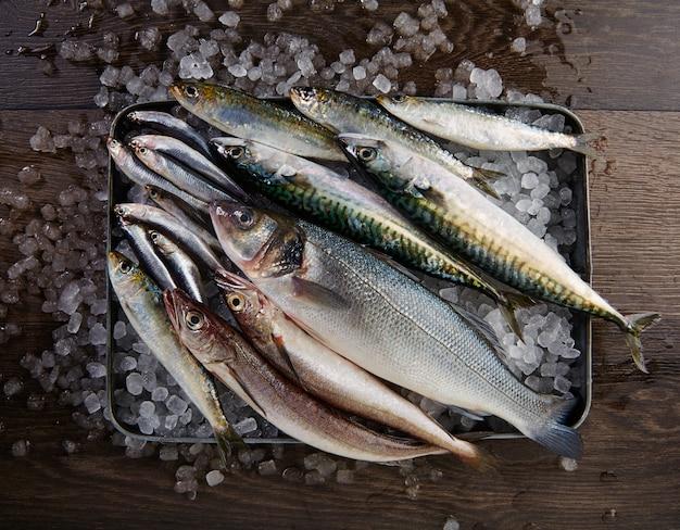 Seehecht-seebarschsardinen-makrelen-sardellen der frischen fische