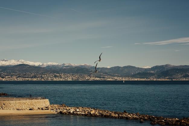 Seelandschaft mit bergküste und fliegenden möwen