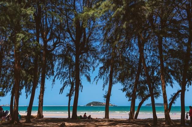 Seelandschaft und kiefernküste, während touristen nach und nach am strand zur ruhe kommen.
