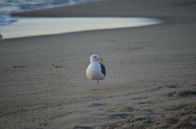 Seemöwe am strand in einem unscharfen hintergrund