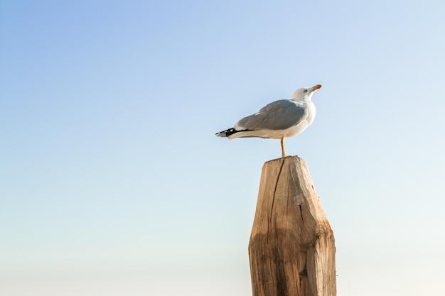 Seemöwe stehend auf holz mit klaren blauen himmel im hintergrund