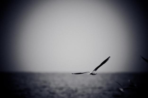 Seemöwe steigt über meer. schwarz-weiß-foto mit filmkorn-effekt