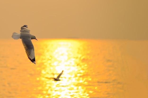 Seemöwefliege über der sonnenuntergangreise in thailand