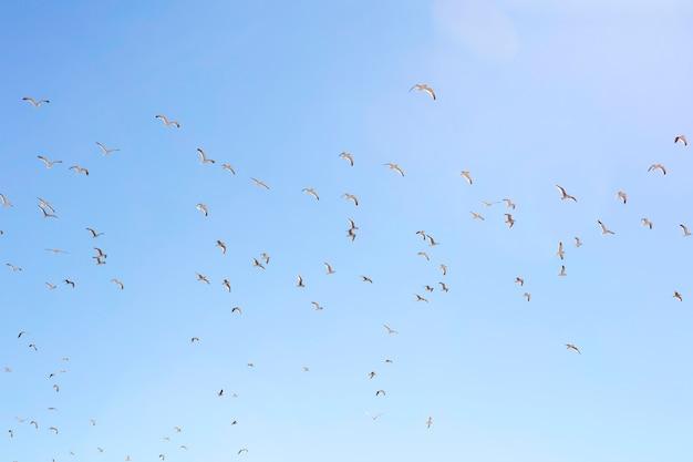 Seemöwen, die in einen klaren himmel fliegen