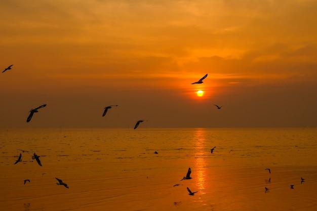 Seemöwenfliege über der sonnenuntergangreise in thailand