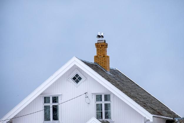 Seemöwenvögel, die auf kaminziegelsteindachspitze stehen