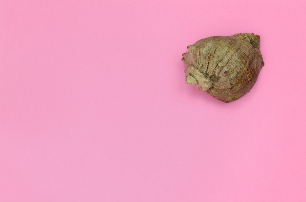 Seeoberteillüge auf beschaffenheitshintergrund des pastellrosafarbpapiers der mode im minimalen konzept