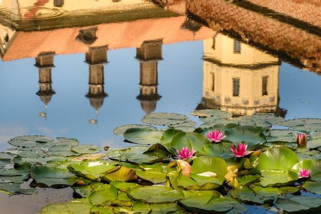 Seerose in einem gartenteich mit einer reflexion des turms des schlosses nesvizh.
