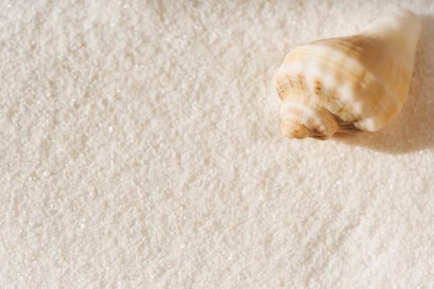 Seeshell auf einem weißen sand