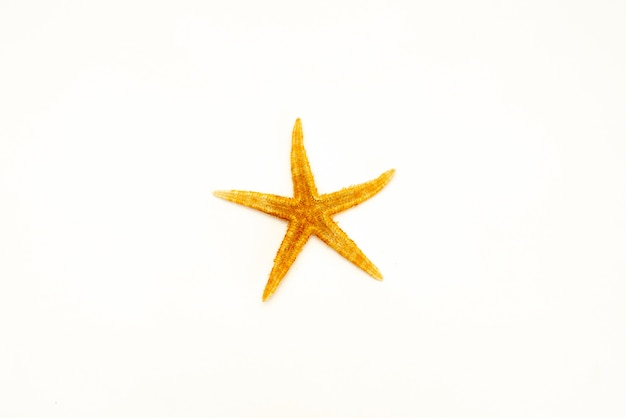 Seestarfish lokalisiert auf einem weißen hintergrund