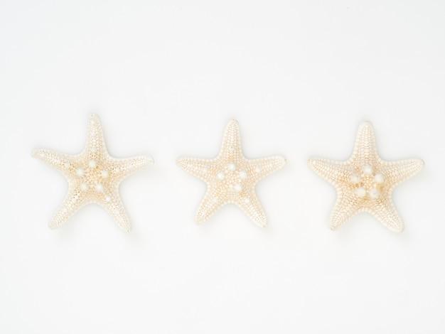 Seestarfish separat gesetzt auf einen weißen hintergrund, raum für das simsen, draufsicht