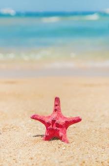 Seestern am strand auf dem sand. tiefenschärfe.