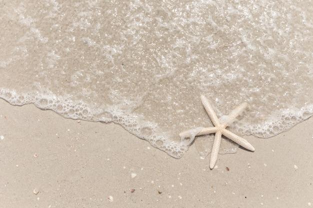Seestern am strand hintergrund