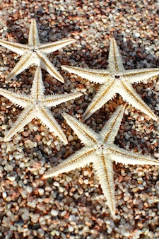 Seestern am strand. sandstrand mit wellen. sommerferienkonzept.