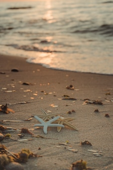 Seestern am ufer des strandes