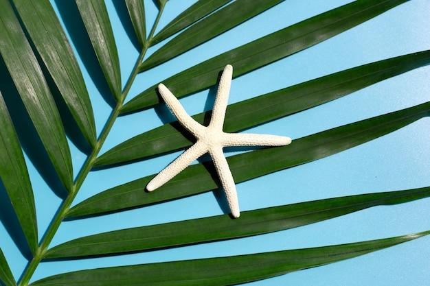 Seestern auf tropischen palmblättern auf blauem hintergrund. sommerferienkonzept genießen. draufsicht