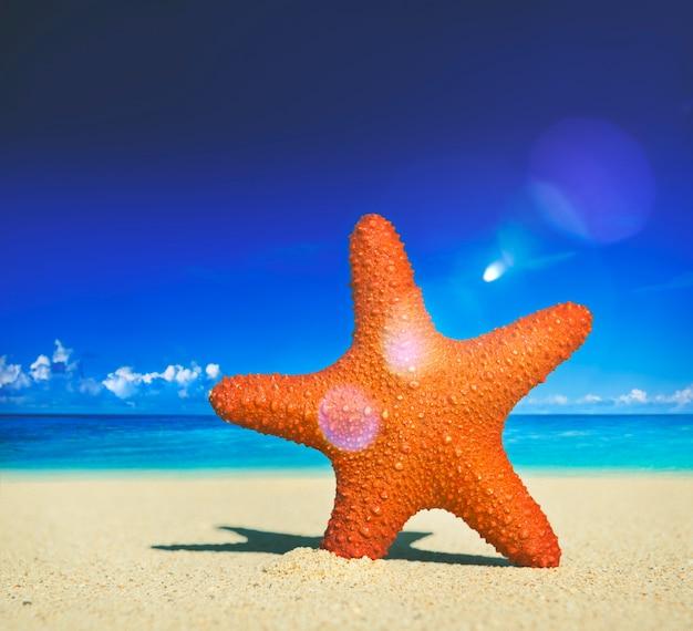 Seestern-tropisches strand-sand-sommer-insel-muschel-konzept