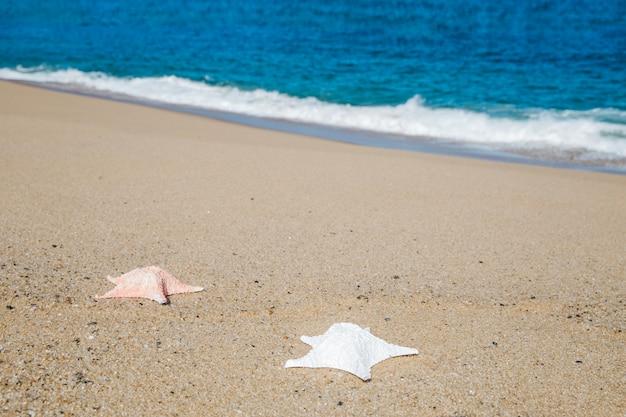 Seesterne auf dem sand