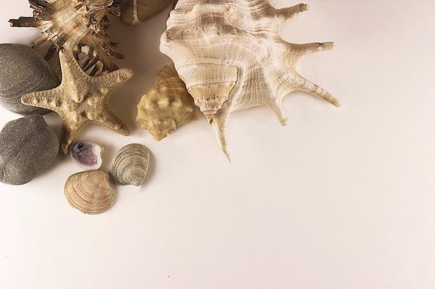 Seesterne, muscheln und steine auf weißem hintergrund. reisekonzeption. design, ozean.